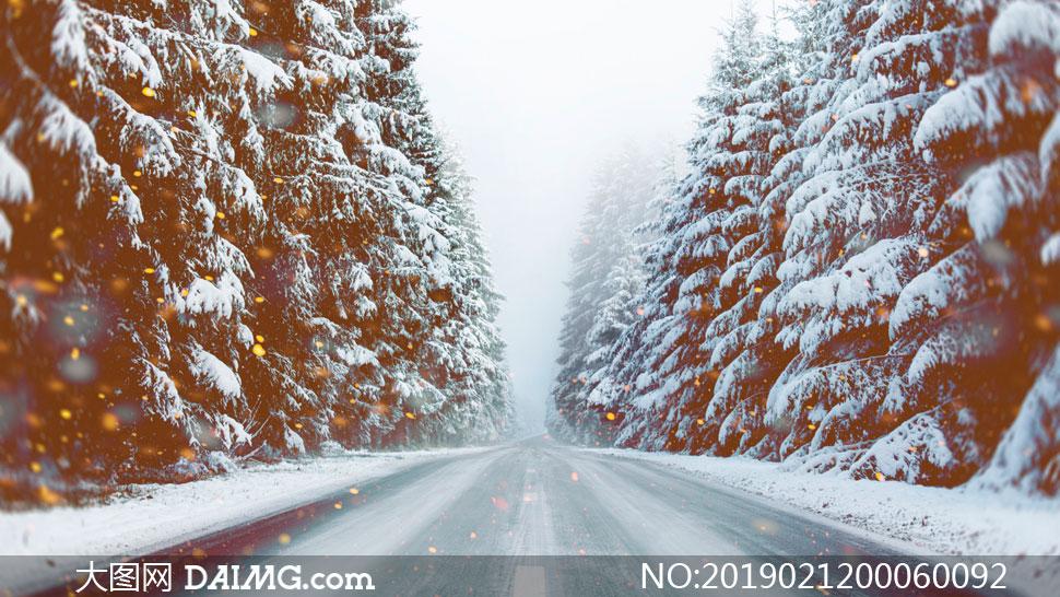 大雪纷飞的森林公路美景摄影图片