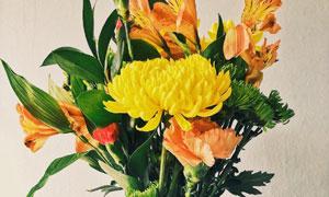 插在花瓶里的花朵特写摄影高清图片