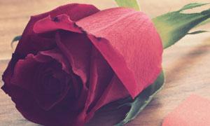 红色桃心纸与玫瑰花朵摄影高清图片