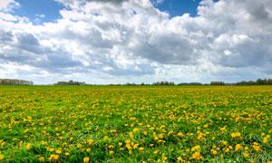 天空白云花草自然风光摄影高清图片