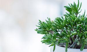 居家环境中摆放的绿植特写摄影图片