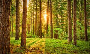 阳光照耀到的树林植被摄影高清图片