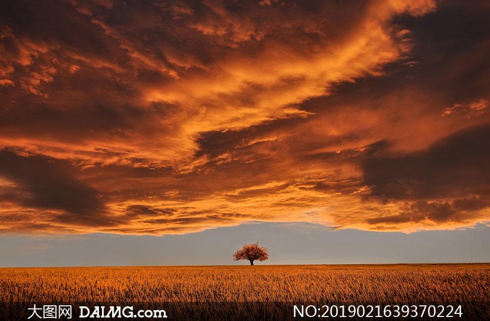 乌云压境下的大树风景摄影高清图片