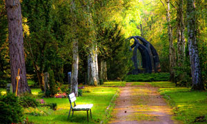 公园树木小路长椅风景摄影高清图片