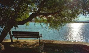 湖畔大树下的长椅风光摄影高清图片