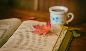 落了片叶子在上面的书摄影高清图片
