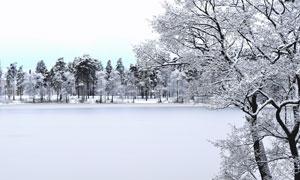 雪后树木与冰封的湖面摄影高清图片