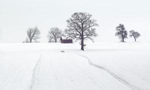 大雪之中的树木与小屋摄影高清图片