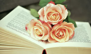 书上的三朵玫瑰花特写摄影高清图片