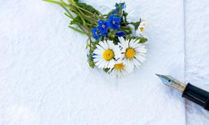 菊花與一支筆近景特寫攝影高清圖片