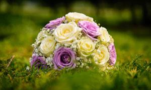 放在草地上的玫瑰捧花摄影高清图片