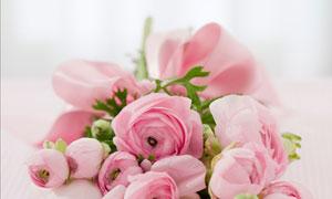 粉红色的玫瑰花束微距摄影高清图片