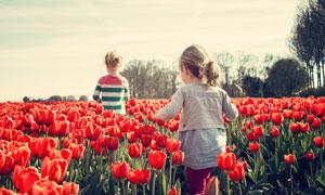 走在郁金香花丛中的小女孩高清图片