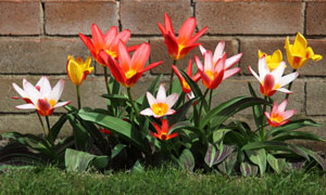 长在砖墙角的几株鲜花摄影高清图片
