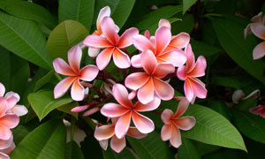 綠葉叢中的小花朵特寫攝影高清圖片