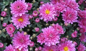 在爭奇斗艷盛開的鮮花攝影高清圖片