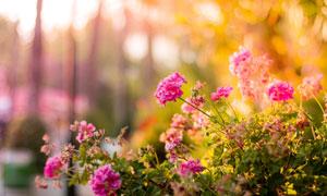 斜坡上的鮮艷花卉植物攝影高清圖片