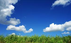 乱草丛与朵朵白云风景摄影高清图片