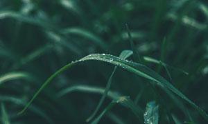 早晨沾了露珠的乱草丛摄影高清图片