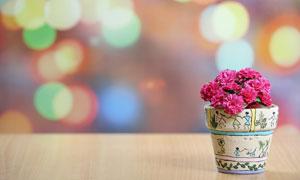 仿真效果红色花朵特写摄影高清图片