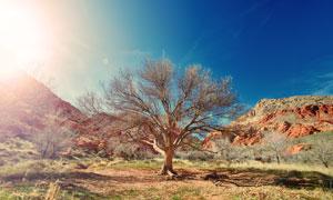 生长在山间的一棵大树摄影高清图片
