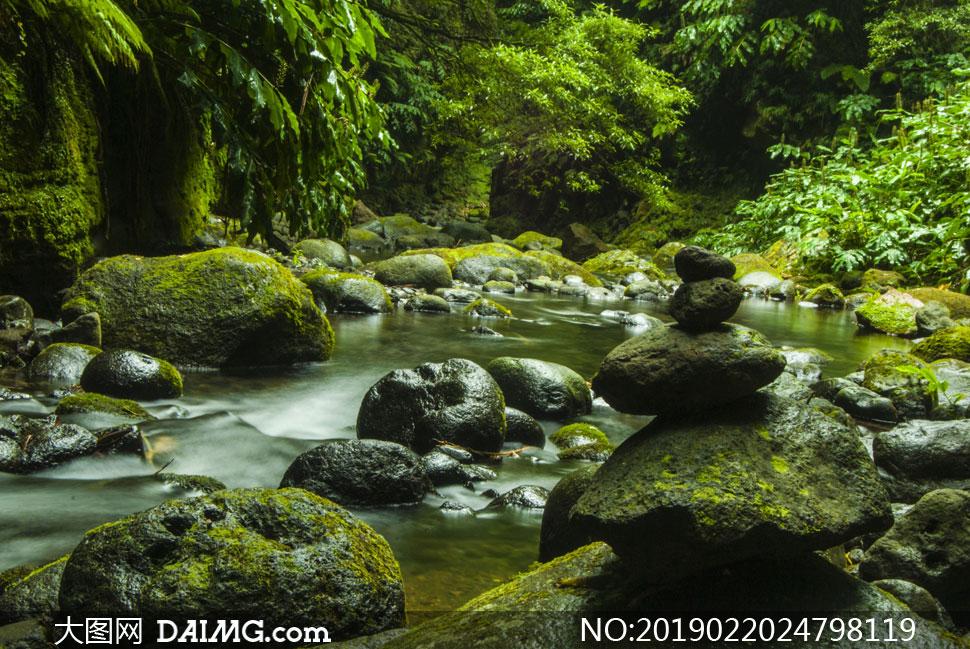 潮湿雨林中的溪水石头摄影高清图片