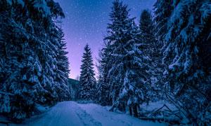 道路与满是白雪的树林摄影高清图片