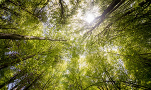茂盛生长着的参天大树摄影高清图片
