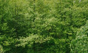 生机勃勃繁茂树林风景摄影高清图片