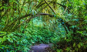 山间小路与茂密的树丛摄影高清图片