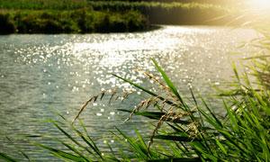 草丛与泛着波光的河水摄影高清图片