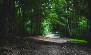 幽深昏暗的林间路风景摄影高清图片
