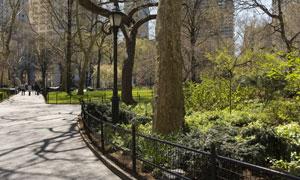 公园里的路灯树木绿化摄影高清图片