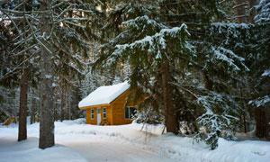 树林中的冰雪木屋风光摄影高清图片