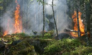 触发了山火的树林风光摄影高清图片