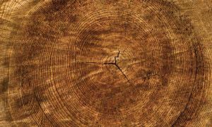 纹理清晰可见木头年轮摄影高清图片