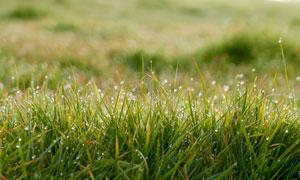 沾满晨露的杂草丛特写摄影高清图片