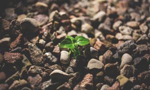 从乱石中长出来的植物摄影高清图片