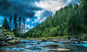 溪水与茂密的树林风光摄影高清图片