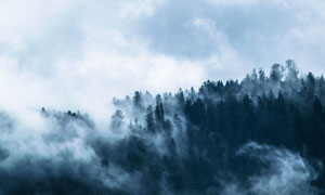 雾气蒸腾着的茂密树林摄影高清图片