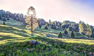 山坡上的树木风景逆光摄影高清图片