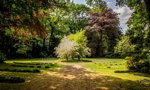 公园草地与茂密的树林摄影高清图片