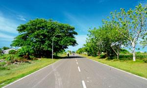 野外公路树木绿化风光摄影高清图片