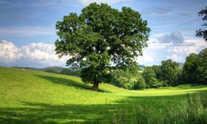 草地上郁郁葱葱的树木摄影高清图片
