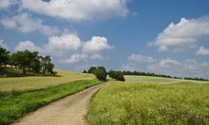 天空白云与田间的小路摄影高清图片