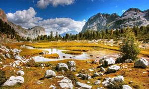 山石树木与快要干涸的湖泊高清图片