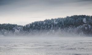 茂密树林与冰封的河面摄影高清图片