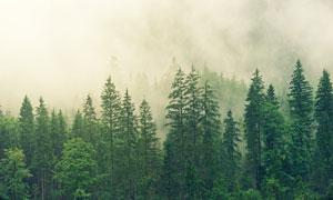 雾气中郁郁葱葱的树林摄影高清图片