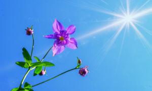 陽光下的鮮艷小花特寫攝影高清圖片