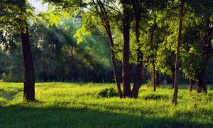 树林中生机勃勃的青草摄影高清图片